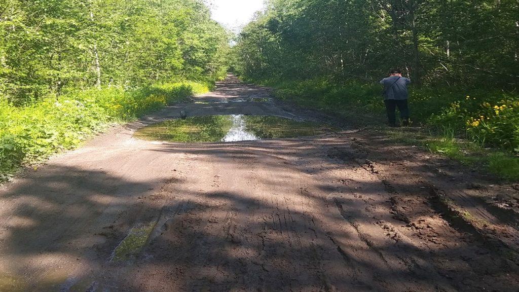 карелия кондопожский район дорога к деревне ерши