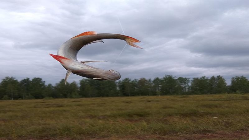 природа ленинградской области