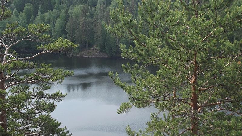 природа ленинградской области озеро ястребин