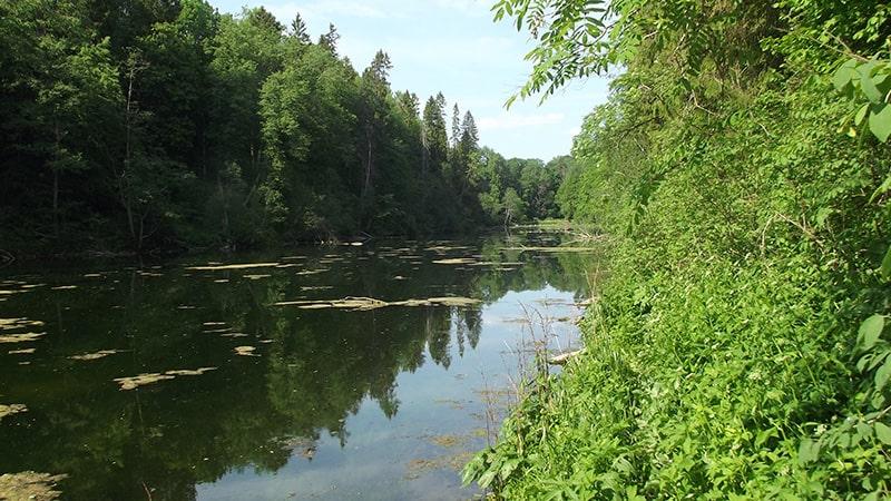 природа ленинградской родоновые озера