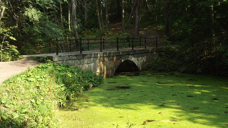 пруд в парке сергиевка