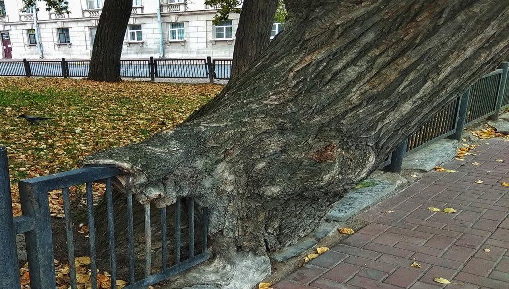природа в городе.санкт петербург.
