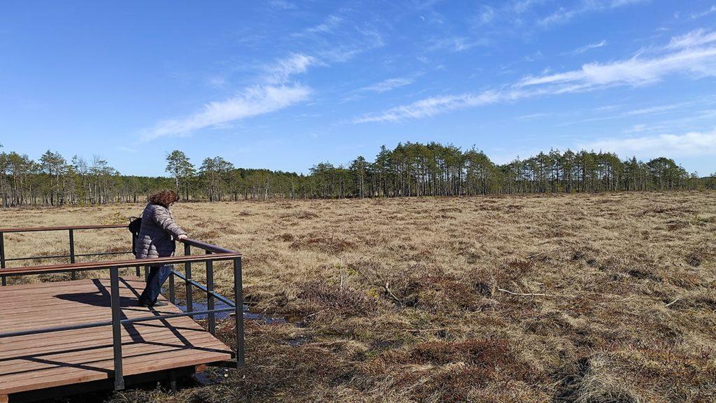 эко тропа сестрорецкое болото.